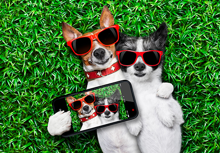 couple of dogs taking a selfie